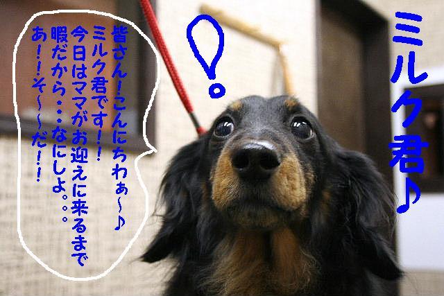 b0130018_17302272.jpg