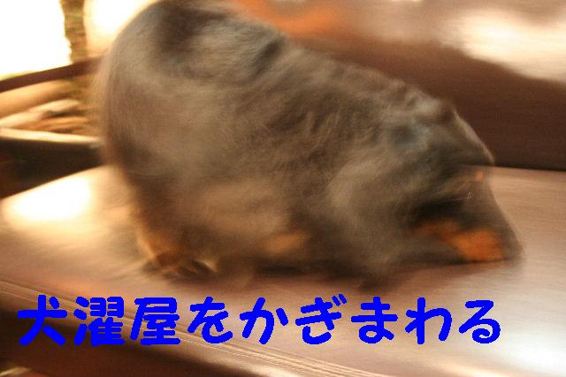 b0130018_17303025.jpg
