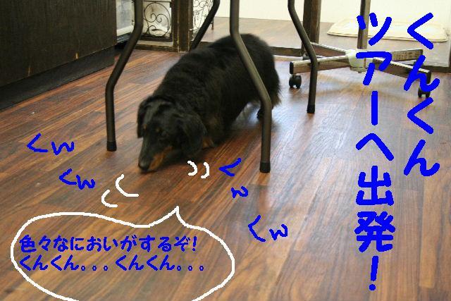 b0130018_17303613.jpg