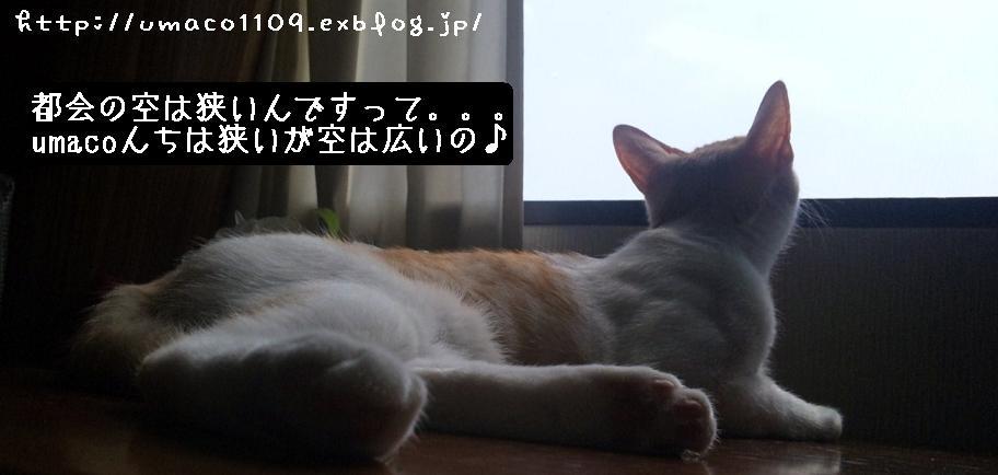 a0165526_005488.jpg