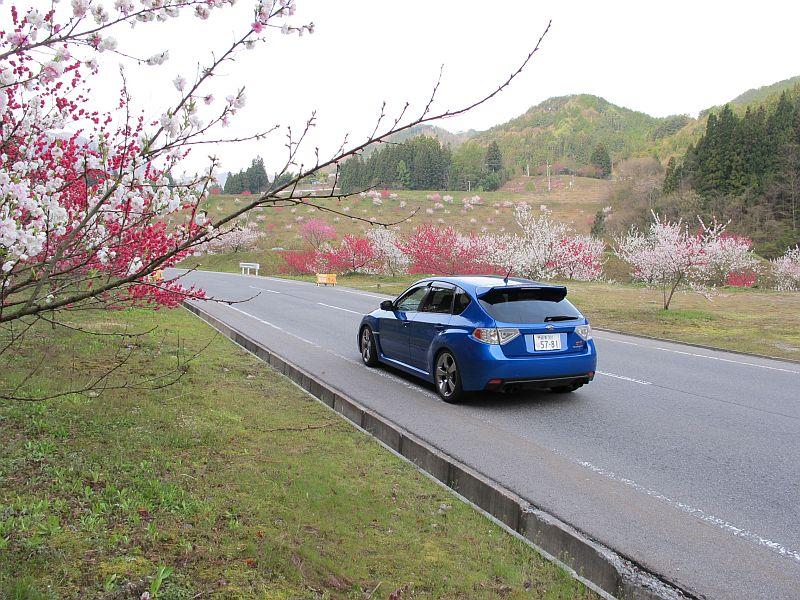 強烈に美しい春の移り変わりとGRBの芳醇なる熟成_f0076731_7393824.jpg