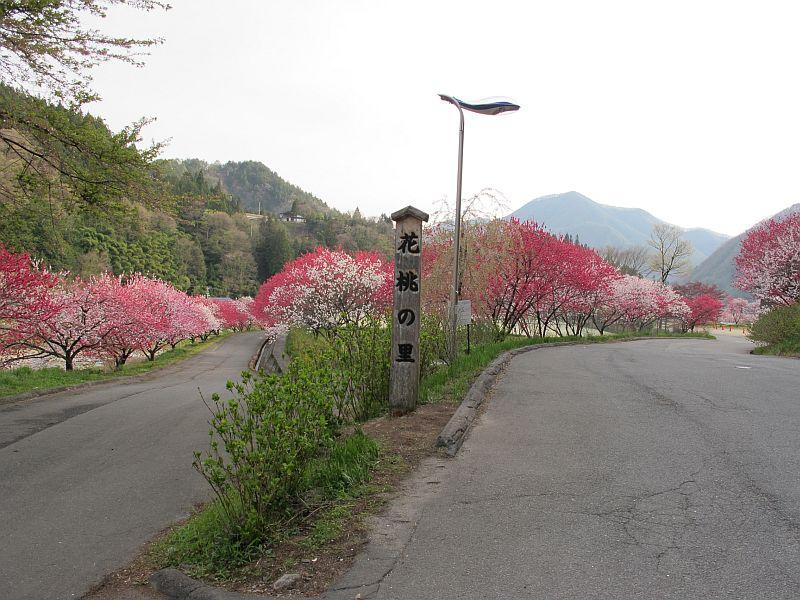 強烈に美しい春の移り変わりとGRBの芳醇なる熟成_f0076731_7395448.jpg