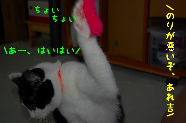 c0181639_1323277.jpg