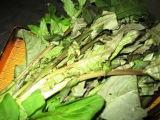 山菜_c0206545_14395627.jpg