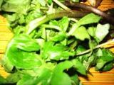 山菜_c0206545_1450239.jpg