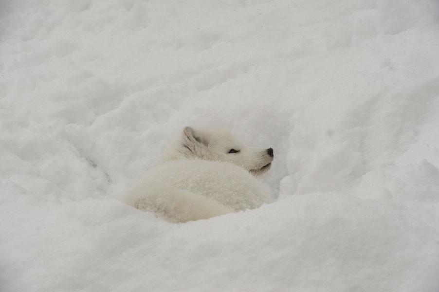 早く冬がこないかな(笑)_b0023856_18534465.jpg