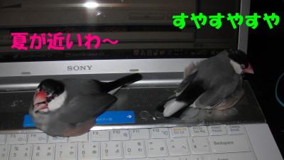 b0158061_1946919.jpg