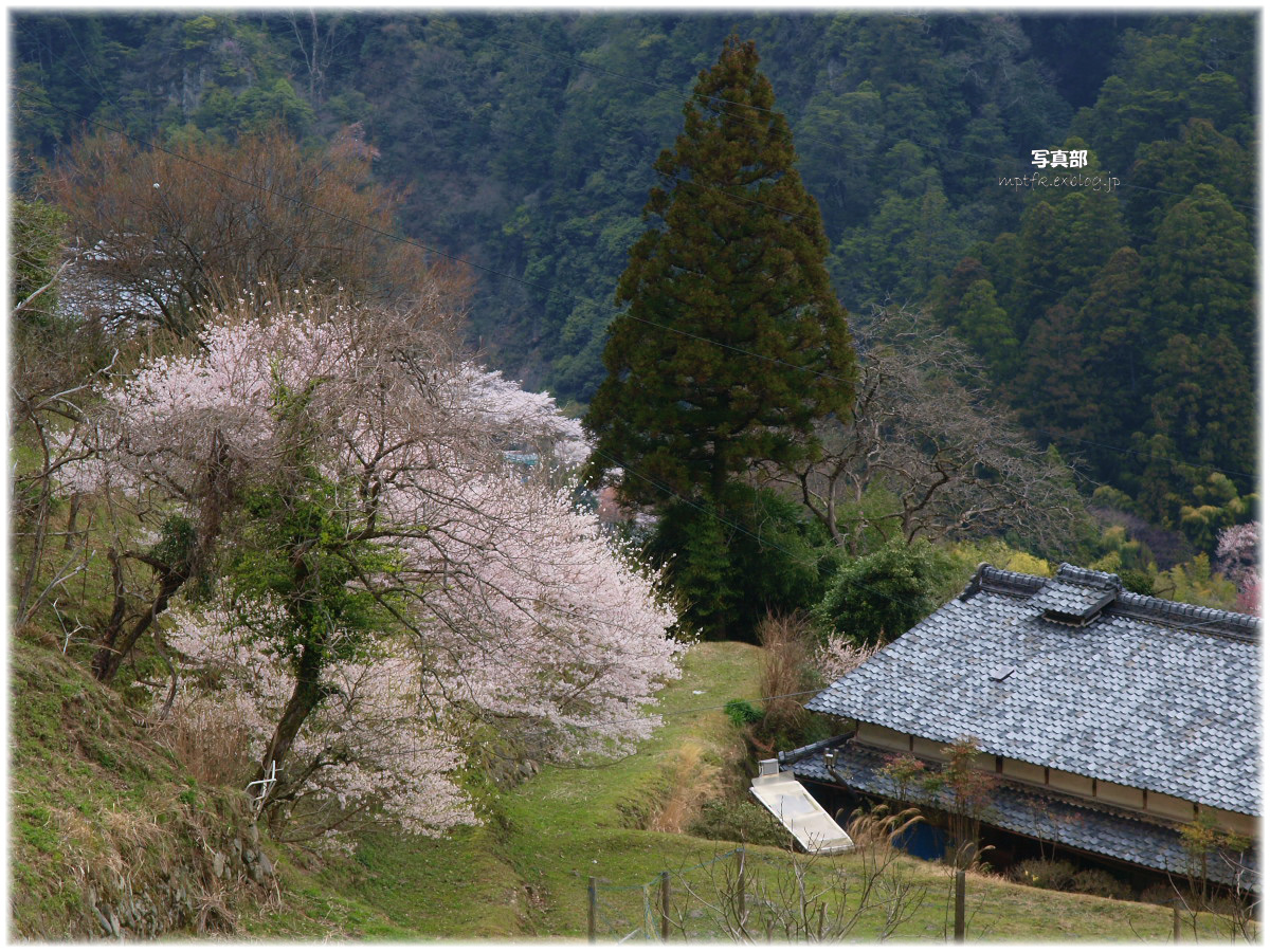 奈良 室生の里 桜_f0021869_23342471.jpg