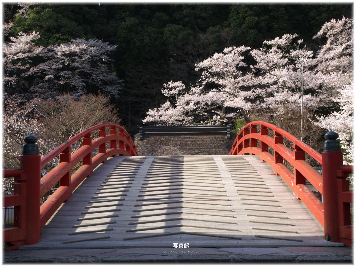 奈良 室生寺 桜 _f0021869_2346337.jpg