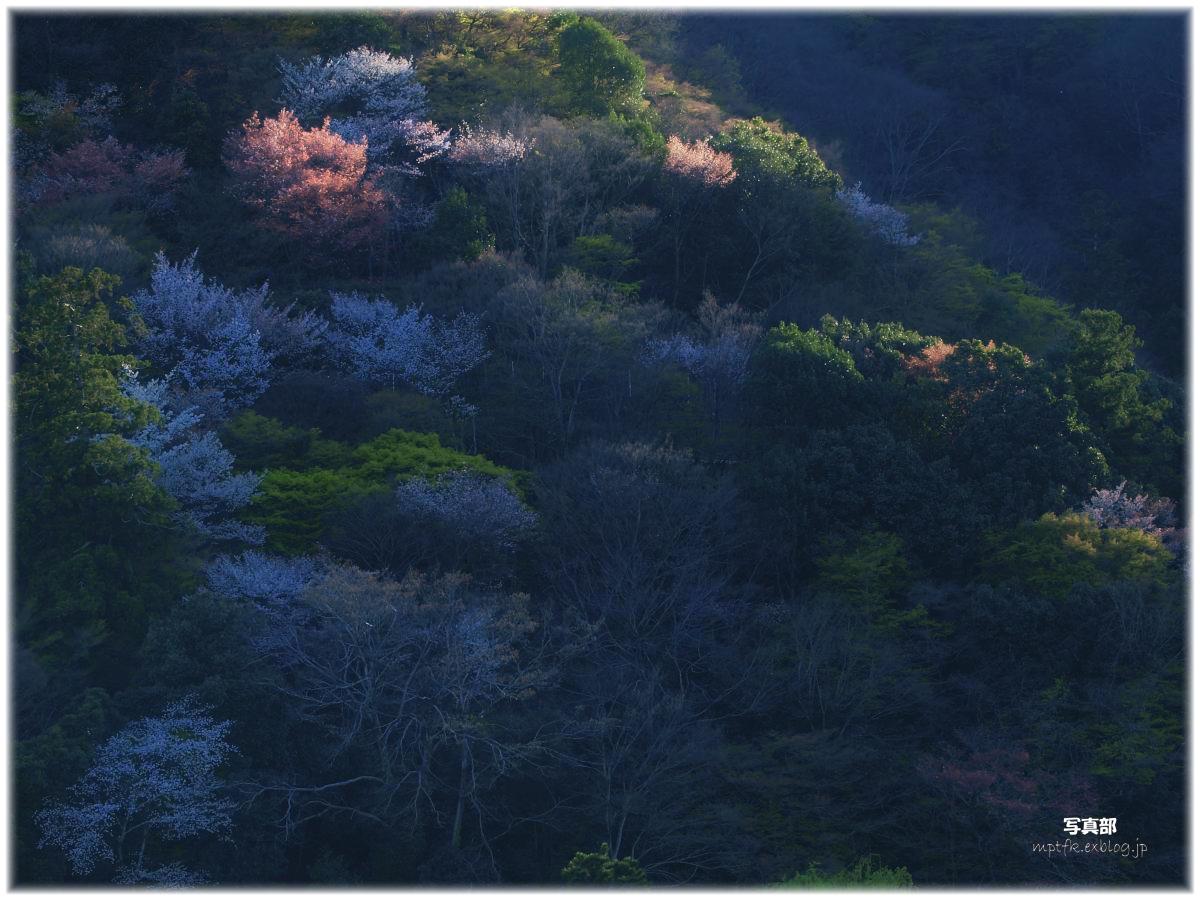京都 嵐山 桜_f0021869_6495376.jpg