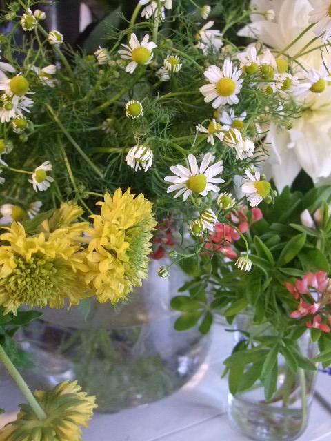 オークリーフ(白いダリアの花)_f0049672_1874637.jpg