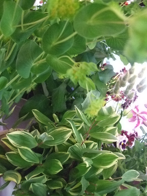 オークリーフ(白いダリアの花)_f0049672_18752100.jpg