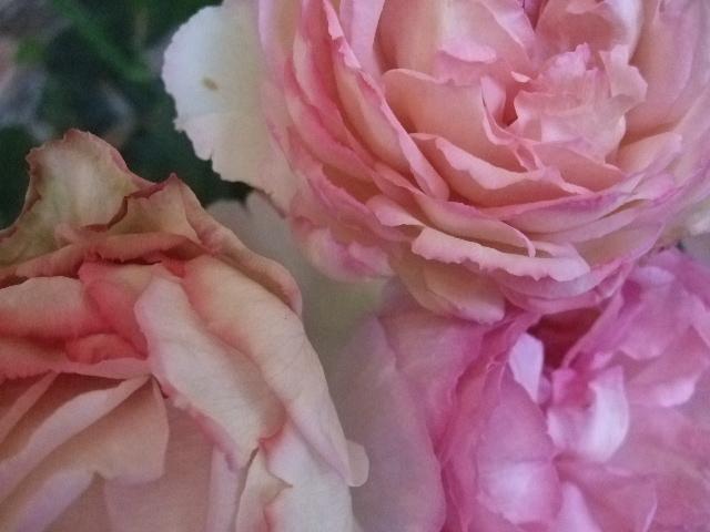 オークリーフ(白いダリアの花)_f0049672_188151.jpg
