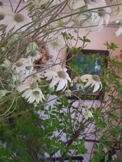 オークリーフ(白いダリアの花)_f0049672_1882115.jpg