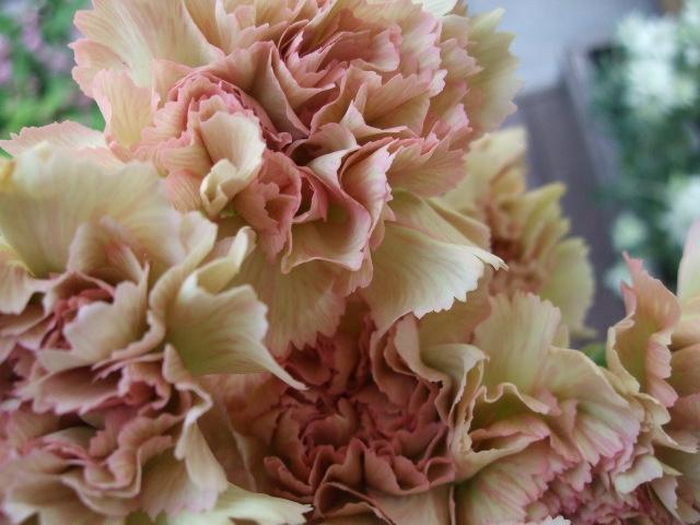 オークリーフ(白いダリアの花)_f0049672_1884043.jpg