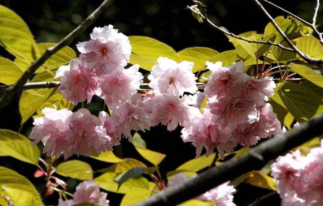 シオカラトンボ             ~寄居町・末野の春~_a0107574_6544135.jpg
