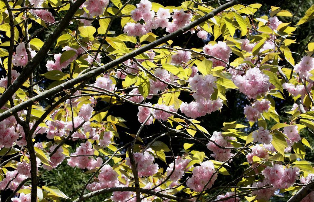 シオカラトンボ             ~寄居町・末野の春~_a0107574_654475.jpg