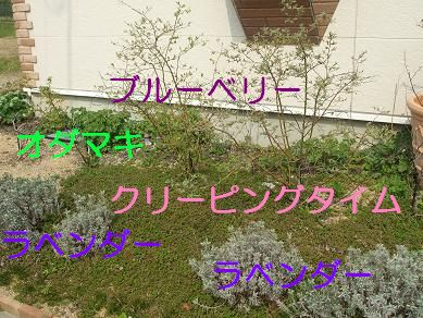 f0179203_17133223.jpg