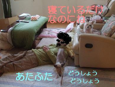 f0179203_949226.jpg
