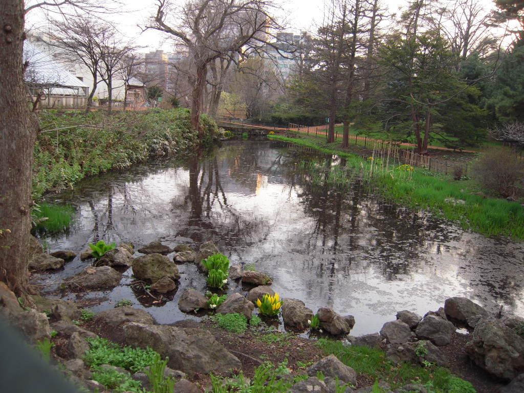 北大植物園のキバナミズバショウ_e0146210_87768.jpg