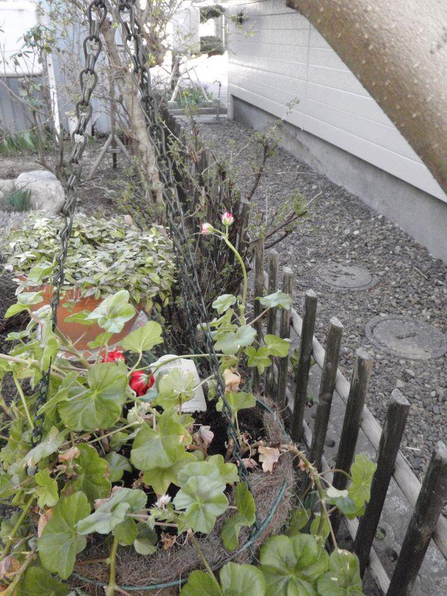 ようやく春の庭仕事_c0025115_22553783.jpg