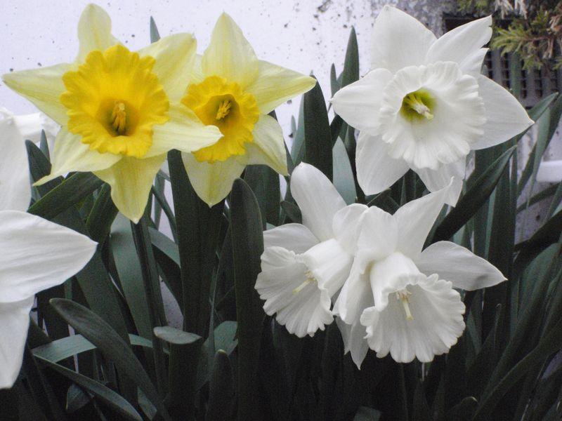 ようやく春の庭仕事_c0025115_22565292.jpg