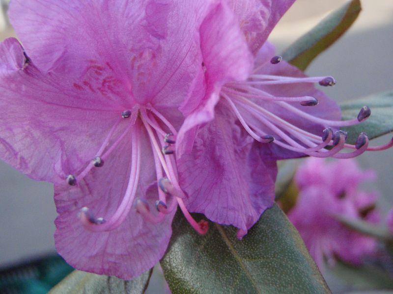 ようやく春の庭仕事_c0025115_22592211.jpg