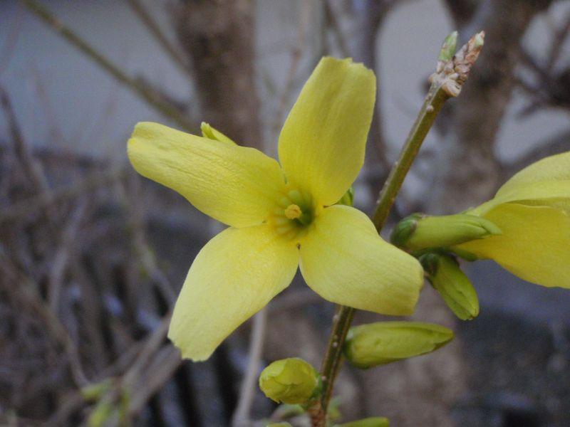 ようやく春の庭仕事_c0025115_230725.jpg