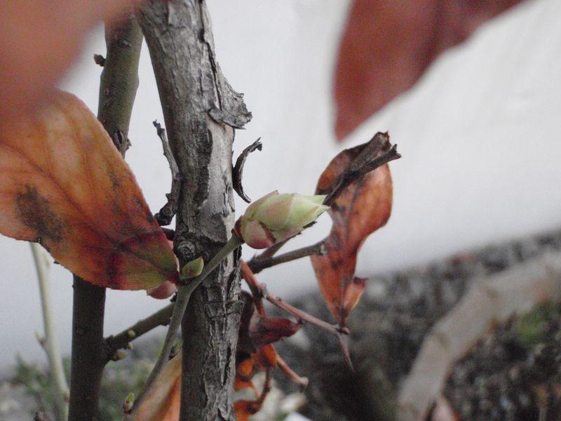 ようやく春の庭仕事_c0025115_2323969.jpg