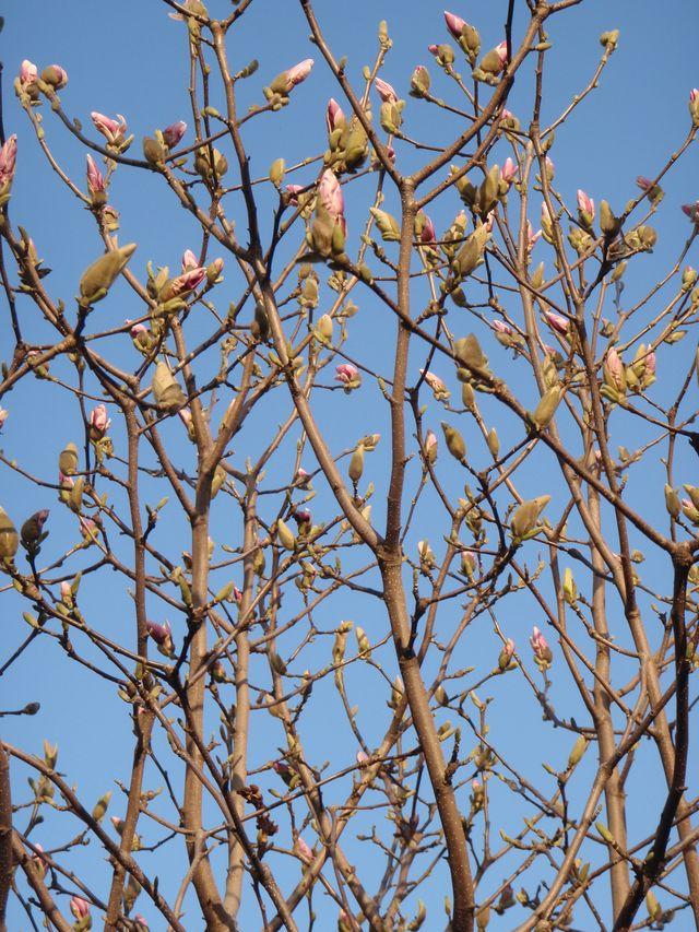 ようやく春の庭仕事_c0025115_2362177.jpg