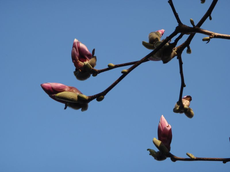 ようやく春の庭仕事_c0025115_2364136.jpg