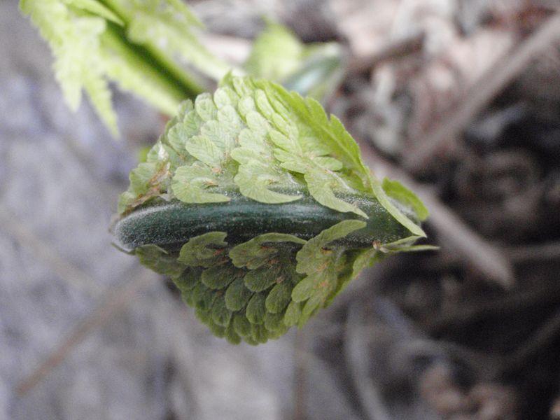ようやく春の庭仕事_c0025115_238428.jpg