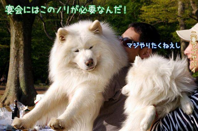 ウゥ~ッ!_c0062832_18105251.jpg