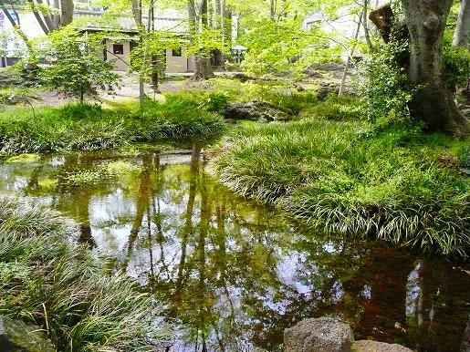 三島の湧水 2010_c0087349_1014132.jpg