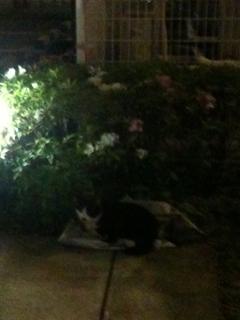 猫天国_e0189353_2127053.jpg