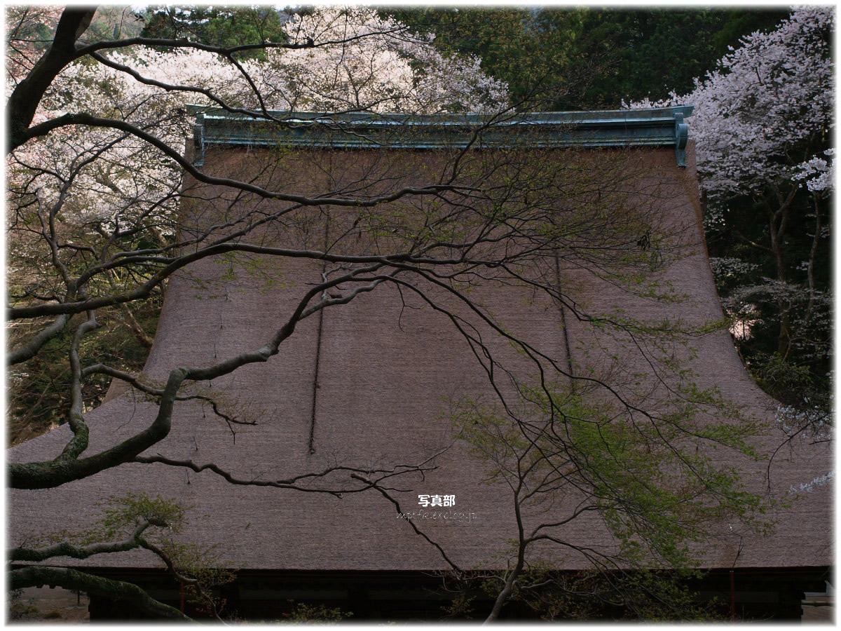 奈良 室生寺 桜_f0021869_14303850.jpg