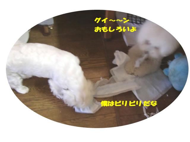 b0060071_13496.jpg