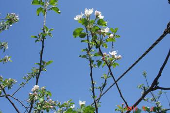 お花見 第二弾♪_c0150273_10334987.jpg