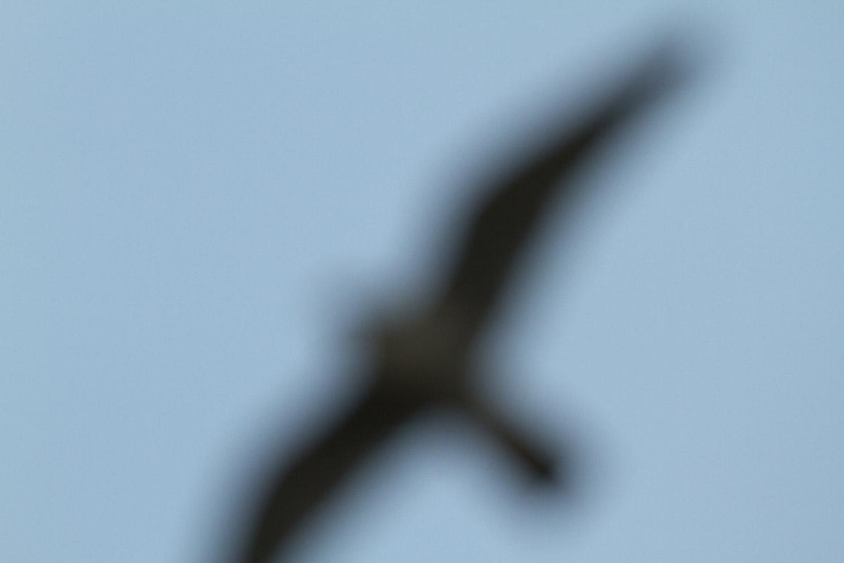 b0180476_20405552.jpg