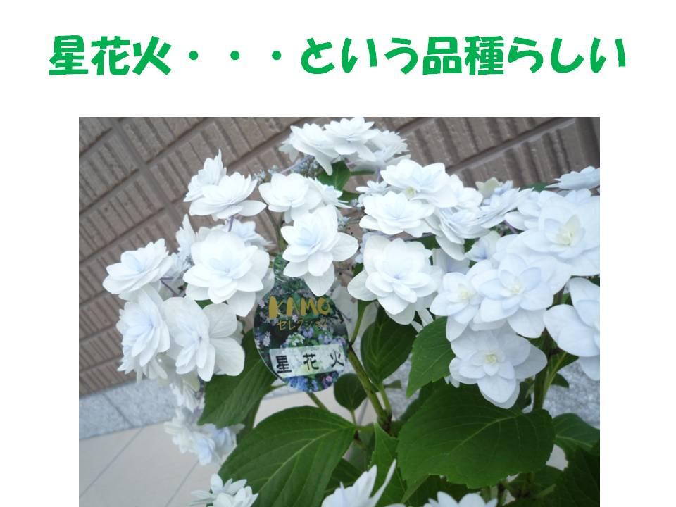 b0129300_2114929.jpg
