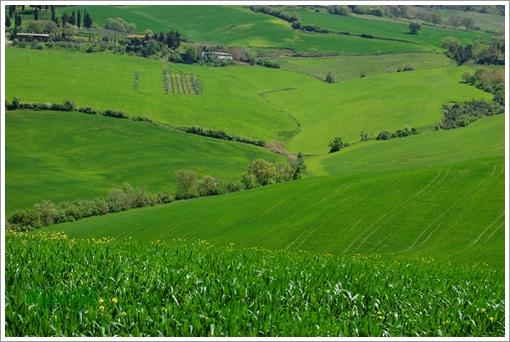 Prato verde  Vol.2_f0062510_6215555.jpg