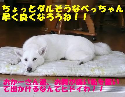 f0121712_99510.jpg