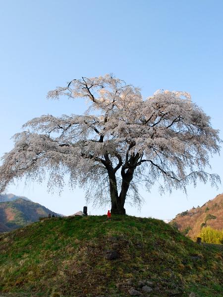 バイクで桜を追いかけて-上発知のしだれ桜_c0177814_23164137.jpg