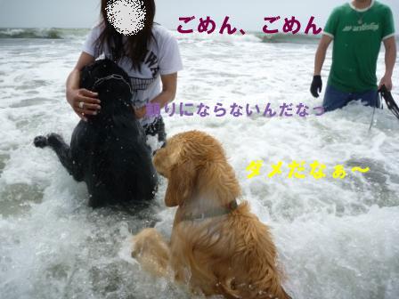 f0176830_21314817.jpg