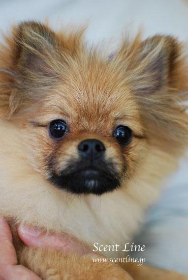 子犬の噛み癖_c0099133_22171594.jpg