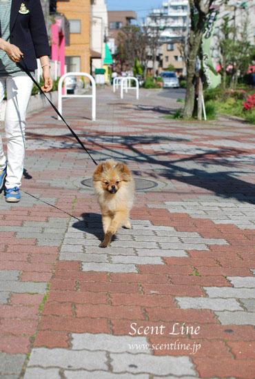 子犬の噛み癖_c0099133_22192558.jpg