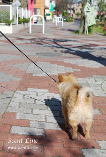 子犬の噛み癖_c0099133_2220316.jpg