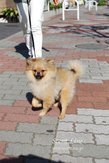 子犬の噛み癖_c0099133_22414668.jpg