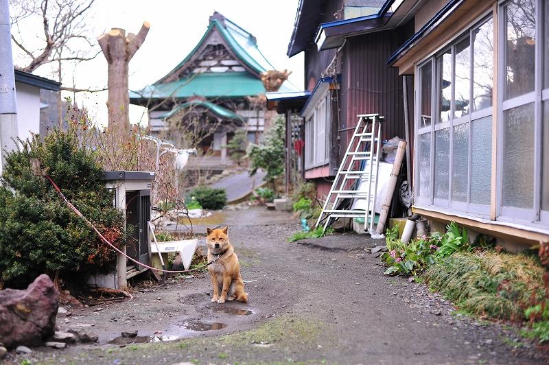 黒石温泉 お出迎え犬_f0050534_17555440.jpg
