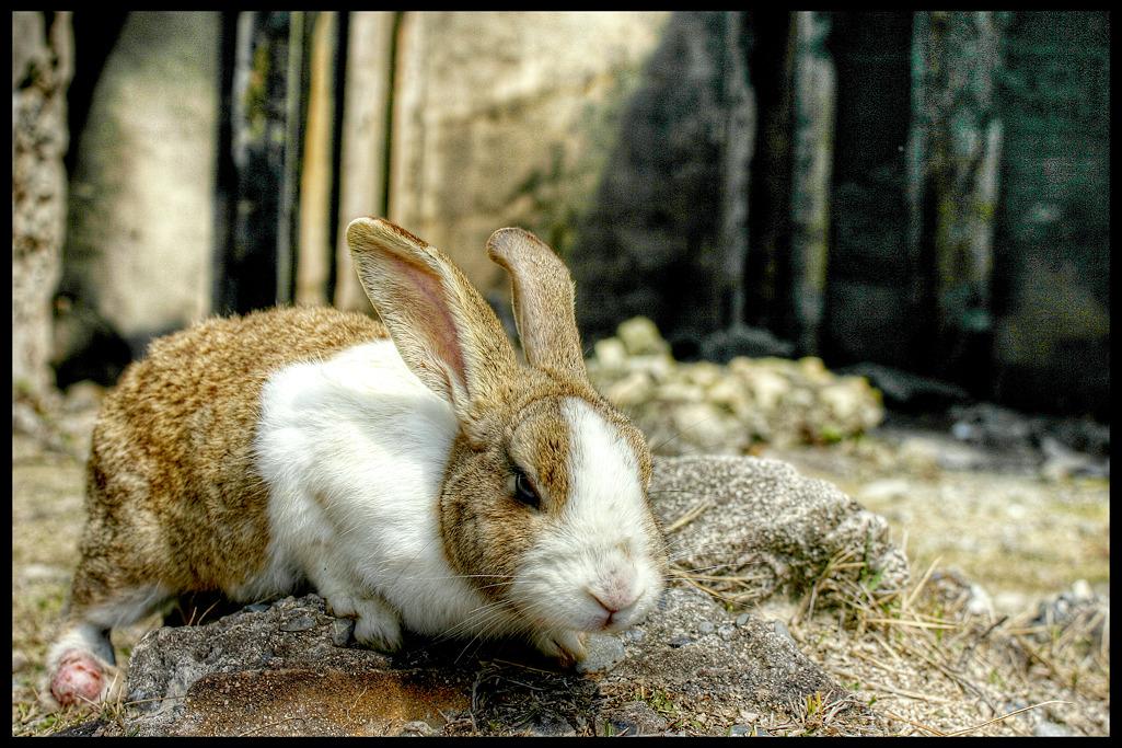ウサギ島_c0214542_21302246.jpg
